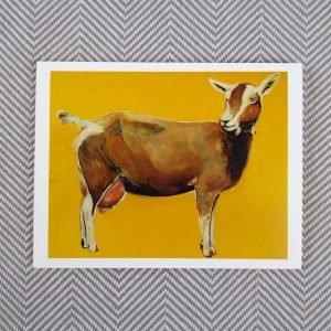 Toggenberg goat